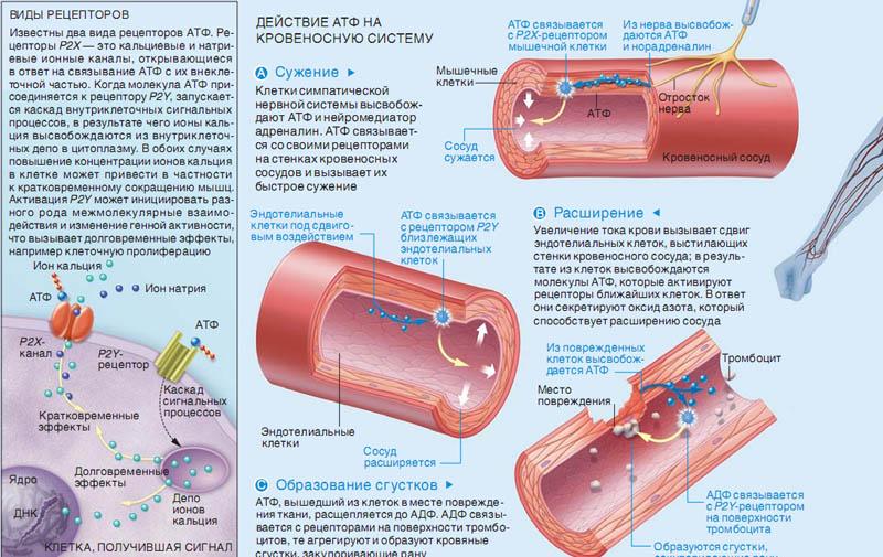 что такое паразиты в организме